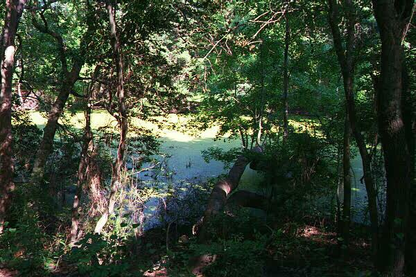 Nags Head Woods: a maritime forest
