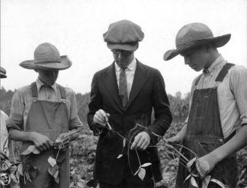 Club members Robert and Steven Sloop and leader examining nodules on mung beans in a soil improvement demonstration field, Rowan County, N.C., September 11, 1923. Courtesy of North Carolina Cooperative Extension Service, NCSU University Archives Photographs.