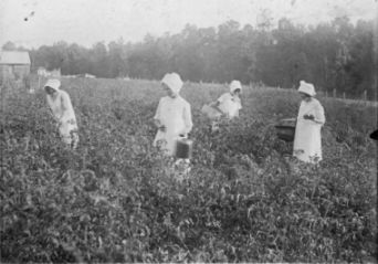 McFarlan Club girls, Anson County, picking cotton, 1927. Image courtesy of North Carolina State University Libraries Special Collections Research Center.